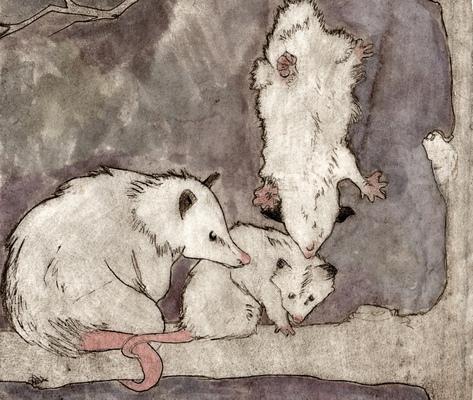 Amber Chiozza - Possum