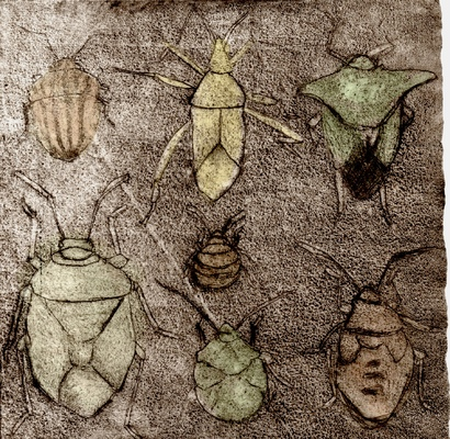 Amber Chiozza - Stink and Shield Bugs