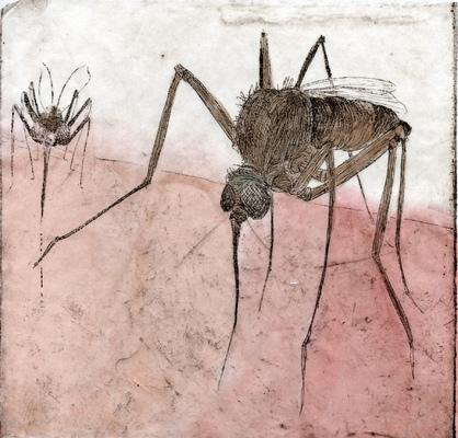 Amber Chiozza - Mosquito
