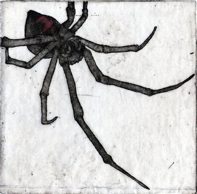 Amber Chiozza - Spider