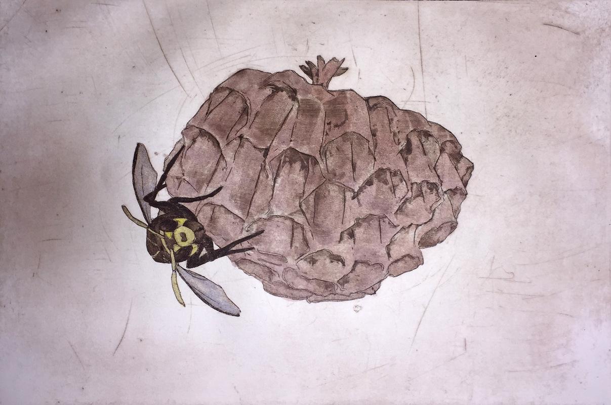 Amber Chiozza - Wasp Nest