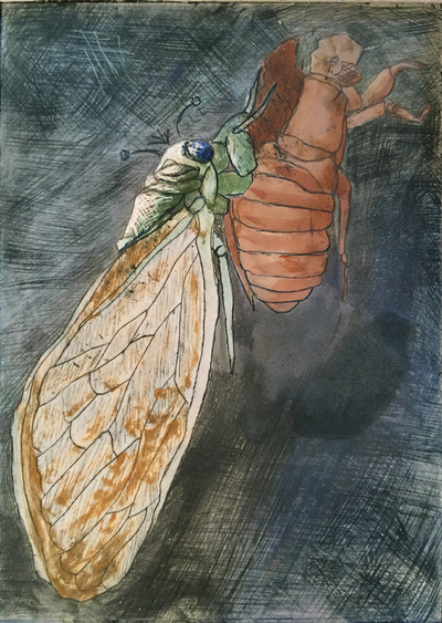 Amber Chiozza - Emerging Cicada. Drypoint. 2015.