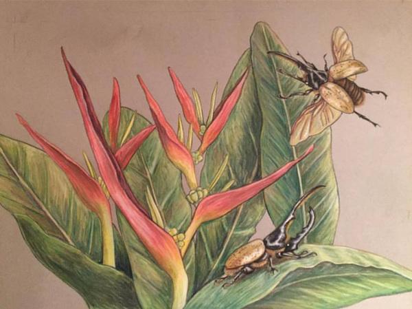 Amber Chiozza - Tropics. Pastel on Paper. 2017