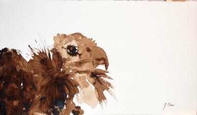 Juliette Choné - Le charognard, 2010, brou de noix sur papier, 65x38 cm