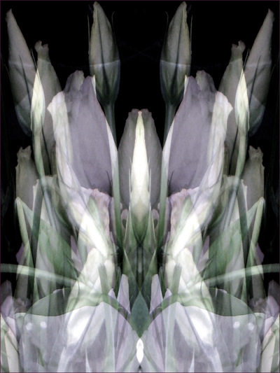 Museum Quality Photographic Art - 2011 Lisianthus Throne for Brian Frouds Faerie Frog Queen who swims in the well of inspiration. While she rests, tall buds protect her and sheer veils warm her delicate legs.
