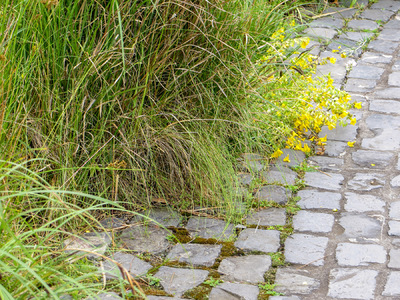 Museum Quality Photographic Art - Cobblestone Garden Path