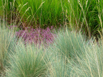 Museum Quality Photographic Art - Grasses and Pink Groundcover