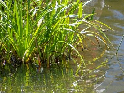 Museum Quality Photographic Art - Grasses in a Pond