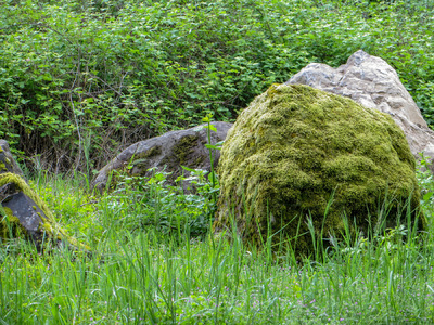 Museum Quality Photographic Art - Mossy Boulders in Green Grass