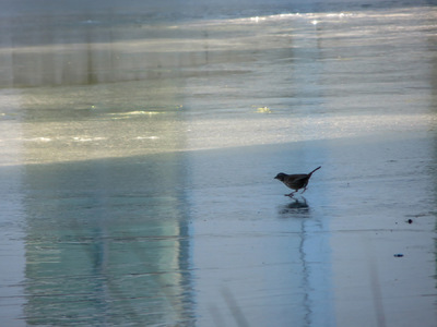 Museum Quality Photographic Art - Bird Near Water