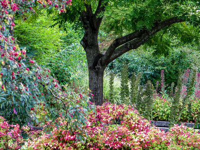 Museum Quality Photographic Art - Shade Tree in a Garden