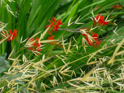 Museum Quality Photographic Art - Crocosmia and Ornamental Grass