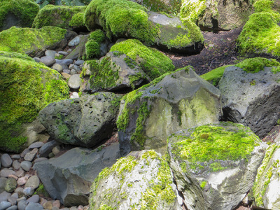 Museum Quality Photographic Art - Sunlit Mossy Boulders and Shadows