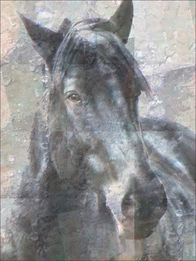 Museum Quality Photographic Art - Asher 4 2016 24 x 32 inches (60.96 x 81.28 cm) Asher is Percheron/Quarter Horse and he moves like a dancer.