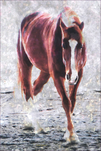 Museum Quality Photographic Art - RED 3 2015 28 x 42 inches (71.12 x 106.68 cm) Red is Belgian Draft/Quarter Horse. Hes the tallest and even his eyelashes are red! His coloring is close to Pantone 2015 Color of the Year: Marsala.