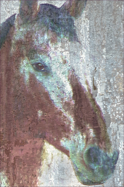 Museum Quality Photographic Art - MAJOR 3 2015 24 x 36 inches (60.96 x 91.44 cm) Major is Appaloosa/Percheron and he looks like hes been sprinkled with powdered sugar. He was the first horse to talk to me in a way I understood.