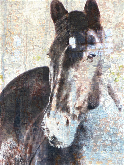 Museum Quality Photographic Art - ZEUS 1 2015 30 x 40 inches (76.20 x 101.60 cm) Herd boss Zeus is an American Warmblood. He is also suave-debonair-dashing, and one of those rare leaders who is easy to respect.