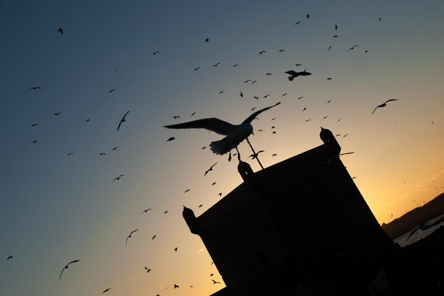 Teresa Arias Photography & Yoga - Essaouira (Morroco)