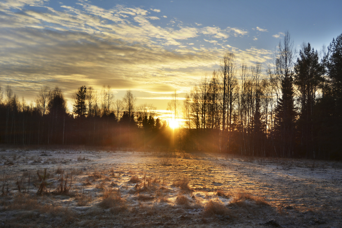 Stina Havemo - Umeå