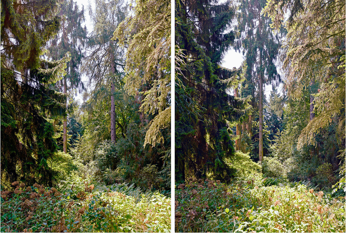 HIRYCZUK / VAN OEVELEN - Pine | Shadow-Light- Reflection series, 2013