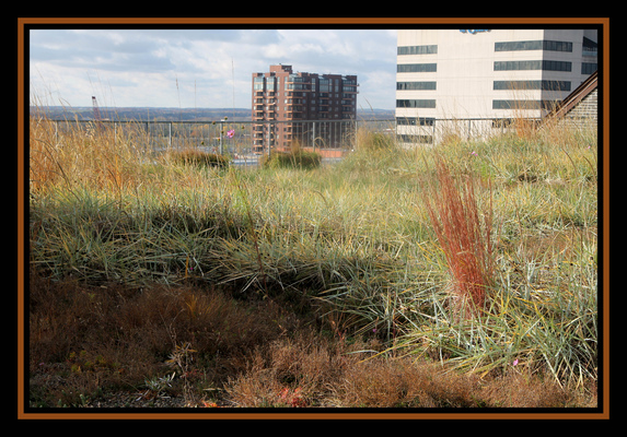 Creative Images by Loyce - Foreground foliage and Orange grasses