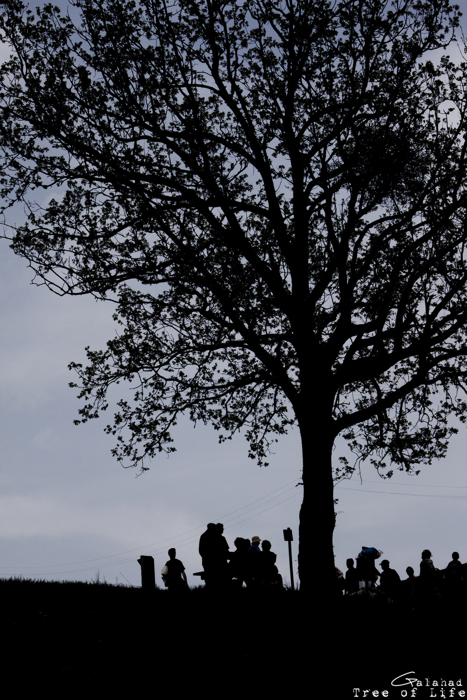 Galahad - Tree of Life
