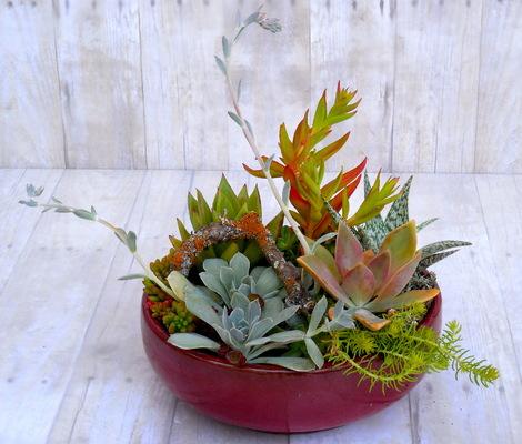 elle que designs - Succulent Planter Garden Design