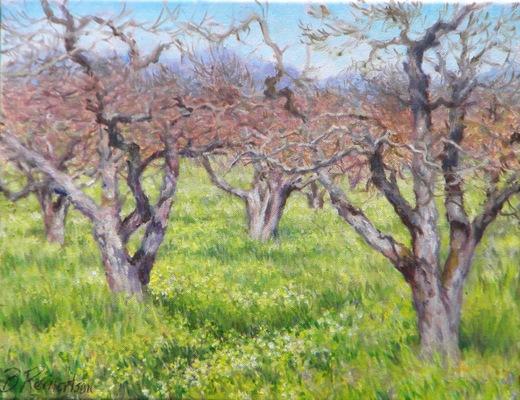 Barbara Reinertson - Almost Apple Blossoms 18 x 14