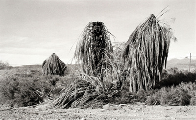 Nieslony Photography - 2001 - Palm Trees (Homage a Meissinger) - Death Valley Trip