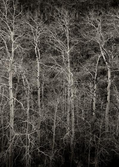 Nieslony Photography