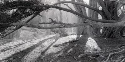 Nieslony Photography - 2004 - Morning Light - Big Sur Trip