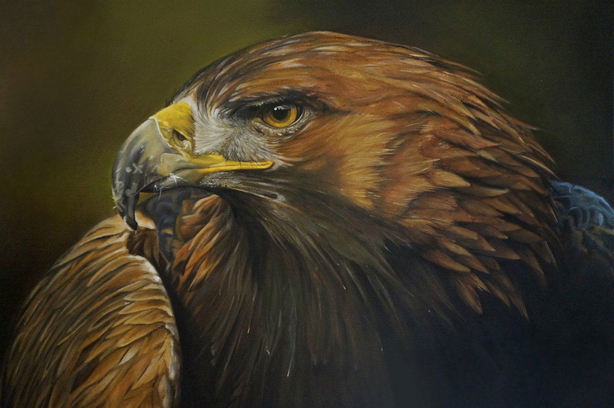 www.mieke-maes.com - Oil painting Golden eagle on canvas paper. 12 x 16 inch / 30.5 x 40.6 cm