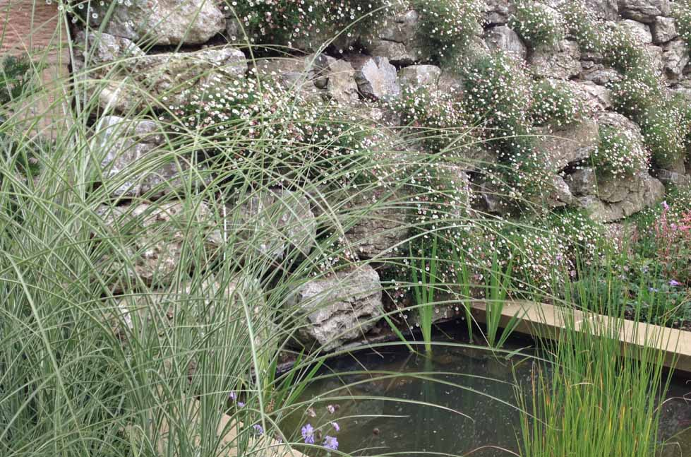plants by design - green wall; re-use of limestone rockery found on site