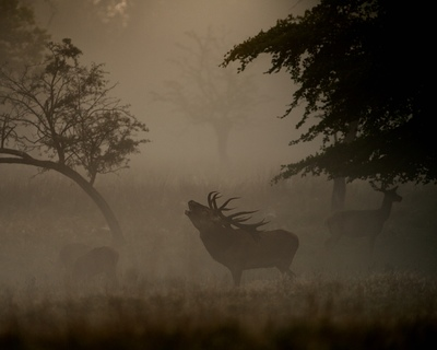 Frode Wendelbo Nature and Wildlife photographer - Kronhjort #2