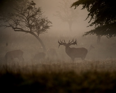 Frode Wendelbo Nature and Wildlife photographer - Kronhjort #1