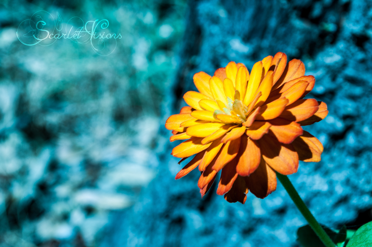 Scarlet Visions Photography -