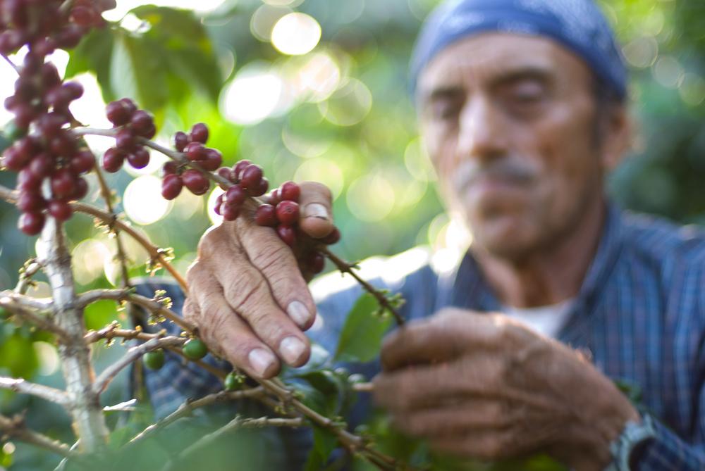 William  Bossen - For Starbucks in San Pedro Guatemala