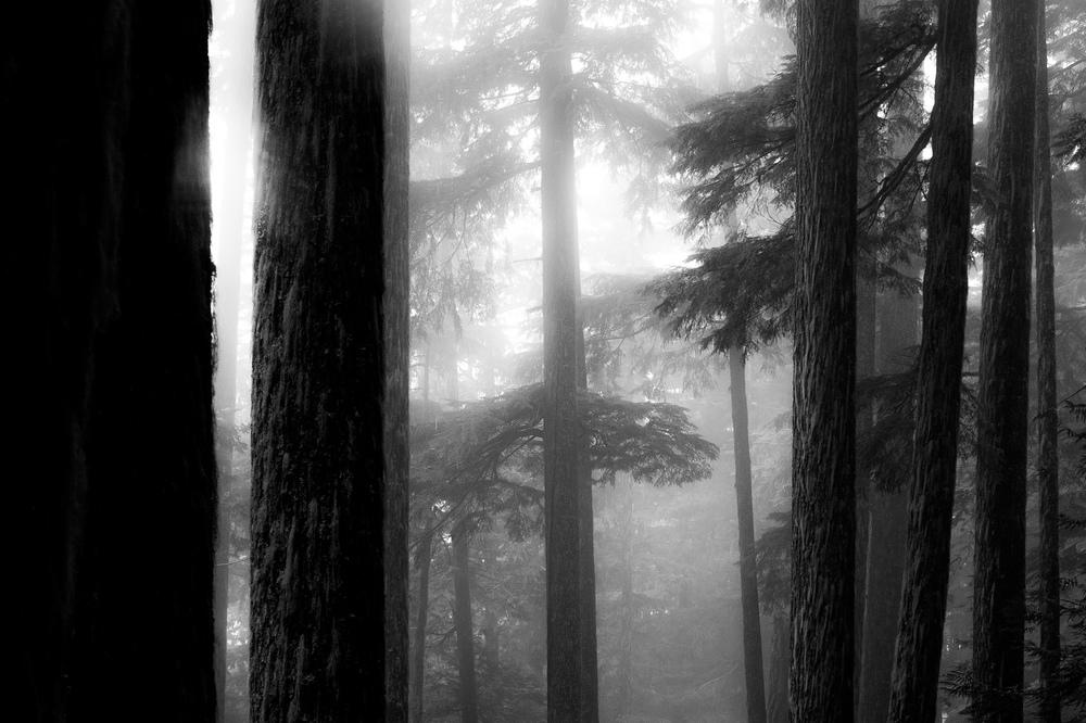 William  Bossen - Evan's Trail